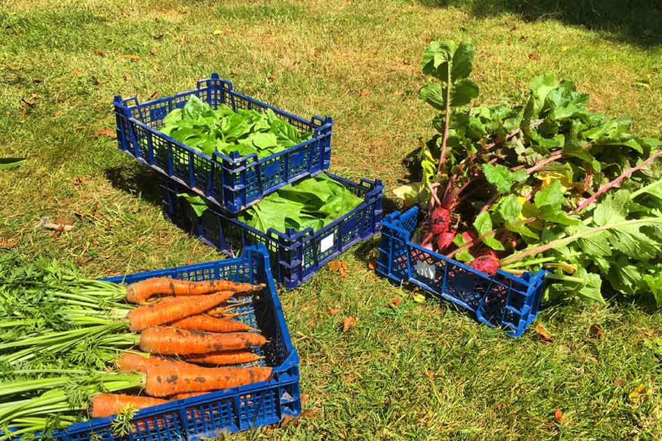 From seed to service – the Potager Garden diary